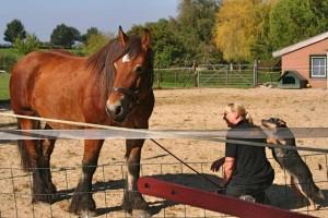 Trainen met paard tijdens de Cattle Dog Dag