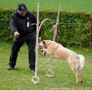 cattledogdag 27-04 114